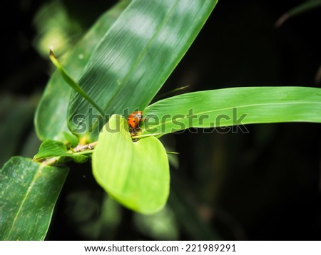 ladybug on leaf under sunlight - stock photo