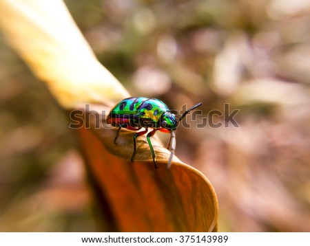 Ladybug on leaves dry background - stock photo