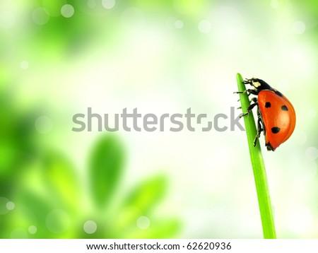 Ladybug on stalk - stock photo