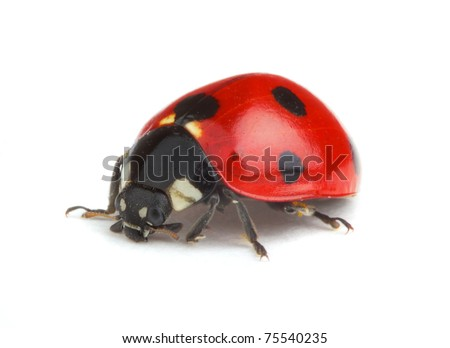 Ladybug on white background - stock photo