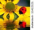 ladybug reflect - stock vector