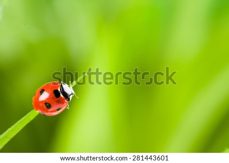 Ladybug running along on blade of  green grass. Beautiful nature - stock photo