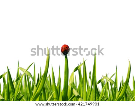 Ladybug running along the green grass on white background