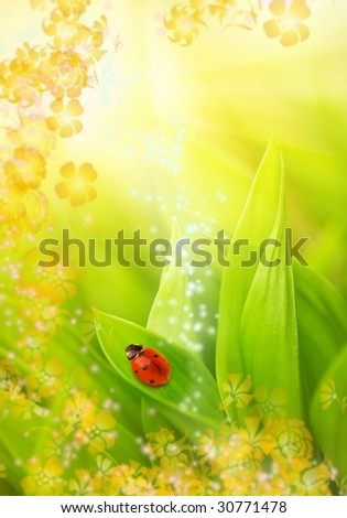 Ladybug sitting on a fresh green grass (shallow DoF) - stock photo