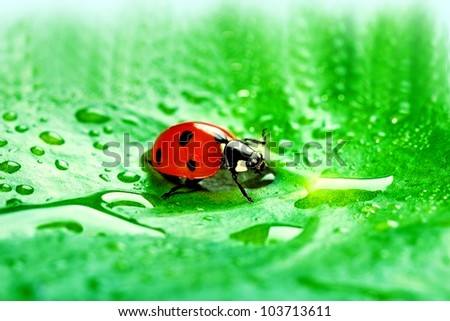 Ladybug sitting on a fresh green leaf