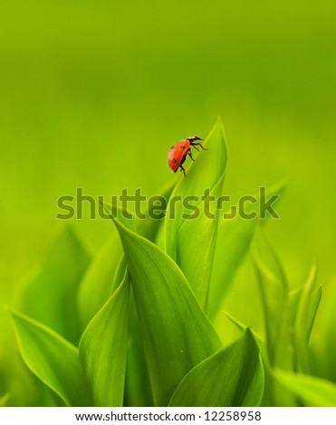 Ladybug sitting on a green grass - stock photo