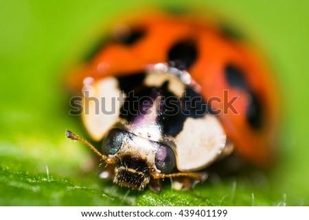 Ladybug - Very Close Macro Photography - Extreme Macro Shot - Beetle - stock photo