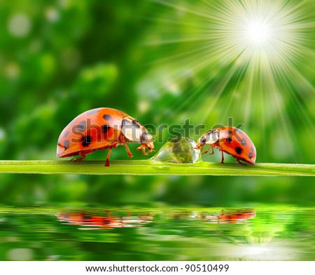 Ladybugs family on a grass bridge over a spring flood. - stock photo