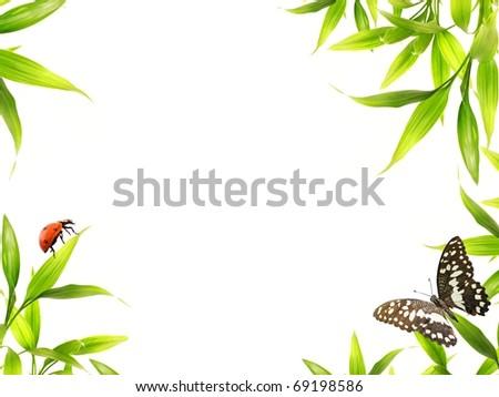 Ladybugs sitting on bamboo leaves - stock photo