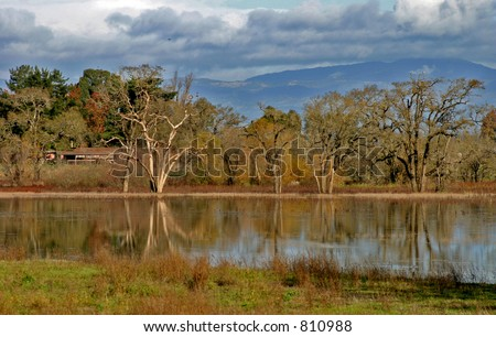 Lagoon Oak Trees - stock photo