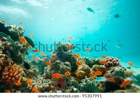 lagoon with corals full of fishes - stock photo
