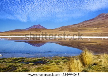"Laguna at the ""Ruta de las Joyas altoandinas"" in Bolivia with pink flamingos fishing in the lake - stock photo"