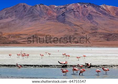 Laguna Celeste, Altiplano, Bolivia, South America - stock photo