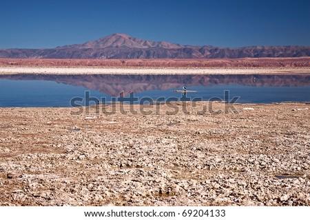 Laguna Chaxa in Salar de Atacama, Chile - stock photo