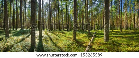 Lahemaa national park forest - stock photo