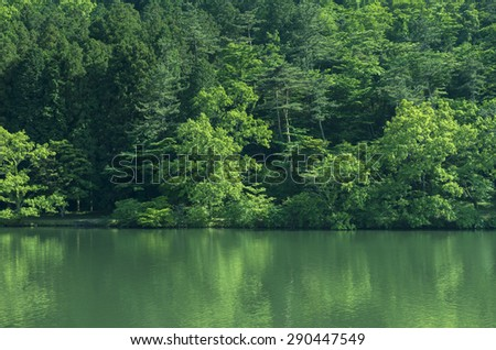 Lake and forest - stock photo