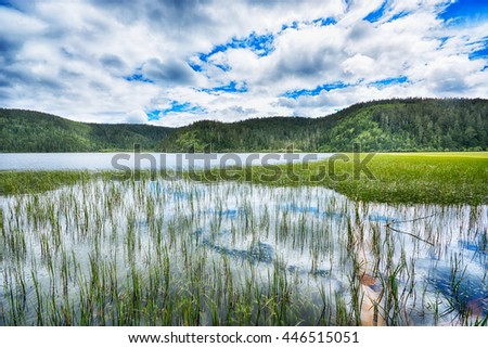 Lake and grass. Beautiful natural landscape