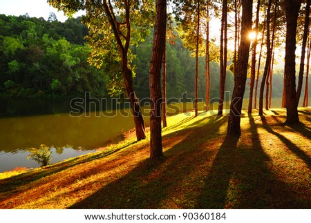 Lake and Pine Forest - stock photo