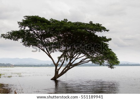 lake and tree
