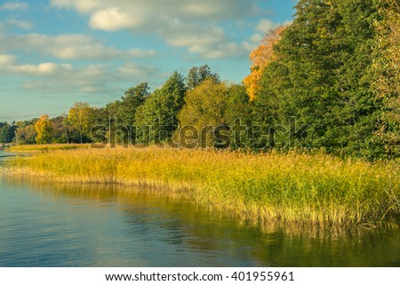 Lake coast with forest under blue sky. On shore of lake in autumn sunny day. Colorful fall foliage with yellow reeds. Beautiful Panoramic landscape with trees, lake and cane. Place for your own text - stock photo