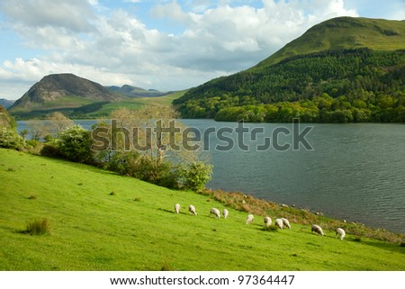 Lake District, Cumbria. UK. English countryside. Sheep Pastures in the English Lake District.  spring. - stock photo