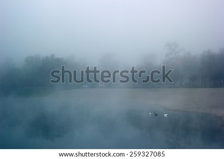 Lake, early in the morning, covered in deep fog, with three swans. - stock photo
