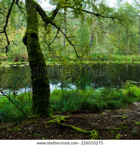 lake in a forest in the Mueritz National Park, Germany