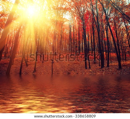 Lake in autumn forest. Beautiful nature background. - stock photo