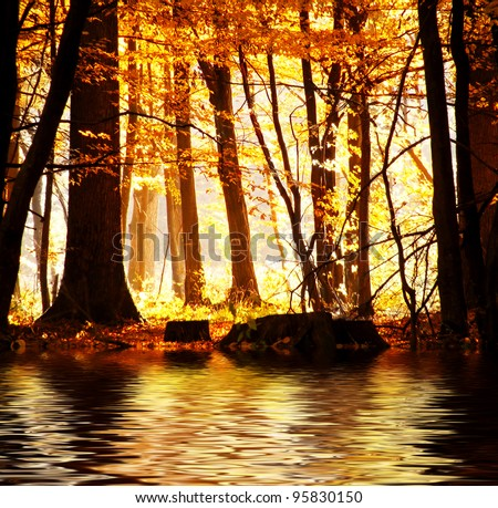 Lake in autumn forest. Beautiful nature background.