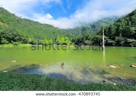 lake in forest