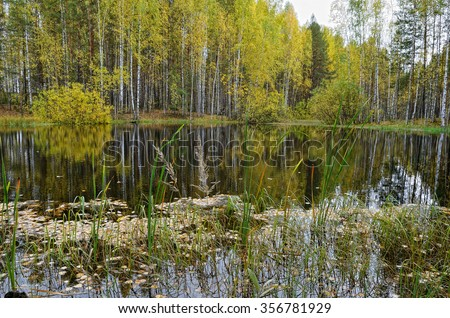 Lake in forest in autumn with fallen leaves floating on the calm surface of water, reflection of trees.