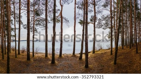 lake in the background in a pine forest - stock photo