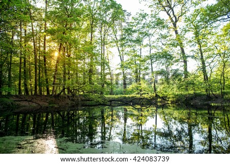 Lake in the forest against the setting sun