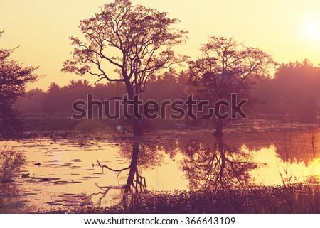 Lake in tropical forest,Sri Lanka - stock photo