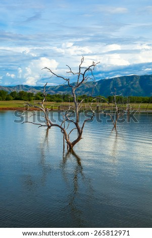 Lake Kariba.  Dead trees and reflection of the sky.  Zambezi River.  Zimbabwe, Africa. - stock photo