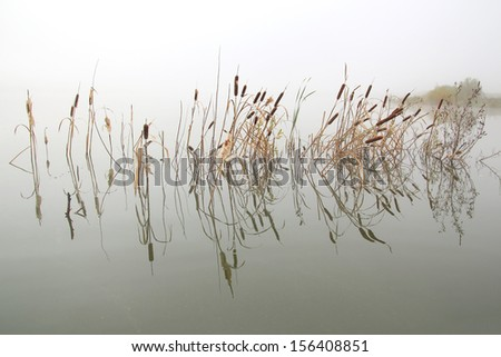 lake landscape in mist - stems of reeds reflected in water - stock photo