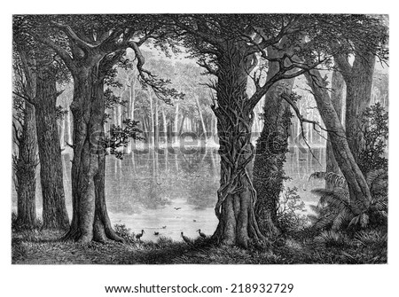 Lake Ligouri, in Angola, Southern Africa, drawing by De Bar based on the English edition, vintage illustration. Le Tour du Monde, Travel Journal, 1881 - stock photo