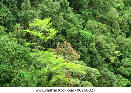 Lake Morris Rain Forest, Cairns, North Queensland, Australia - stock photo