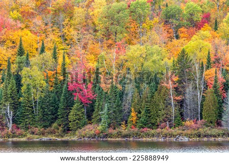 Lake shoreline in peak fall colors - stock photo