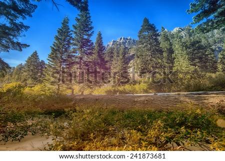 Lake Tahoe Forrest - stock photo
