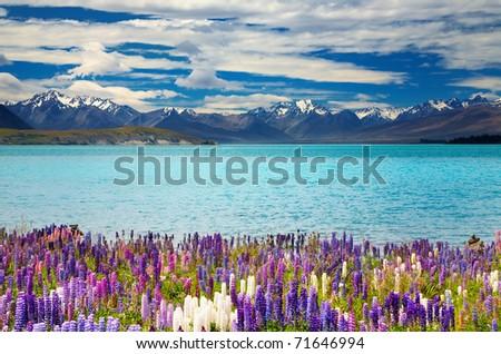Lake Tekapo, South Island, New Zealand - stock photo