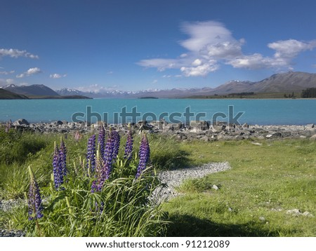 lake tekapo, with lupins in spring, new zealand south island