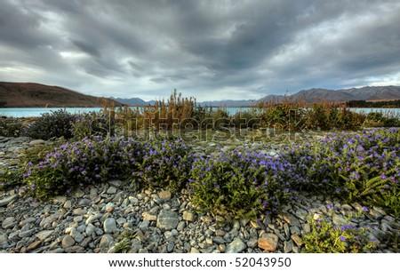 Lake Tepako, New Zealand - stock photo