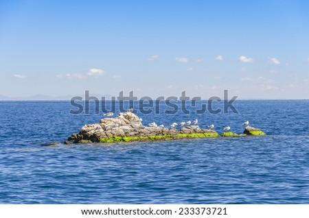 Lake Titicaca, Bolivia - seagulls on rocks - stock photo