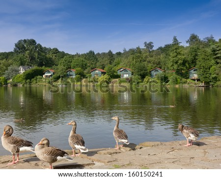 Lake with geese and lodges for free time