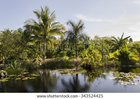 Lake with palm trees