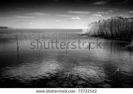 Lake with reed in black and white - stock photo
