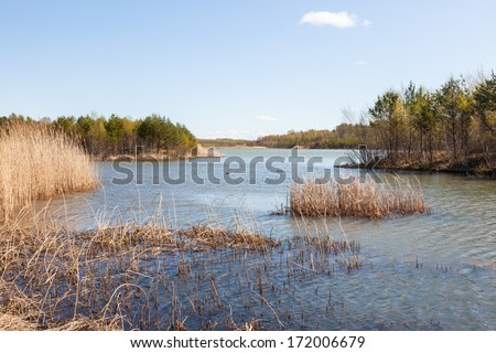 Lake with reeds in spring