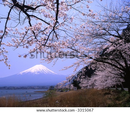 Lakeside view of Mount Fuji in Spring with cherry blossoms - stock photo