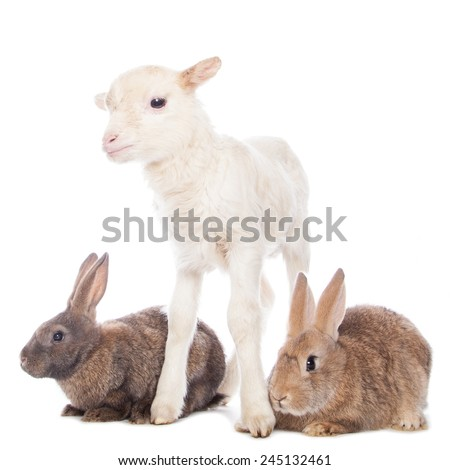 Lamb and  two rabbits on the white background - stock photo